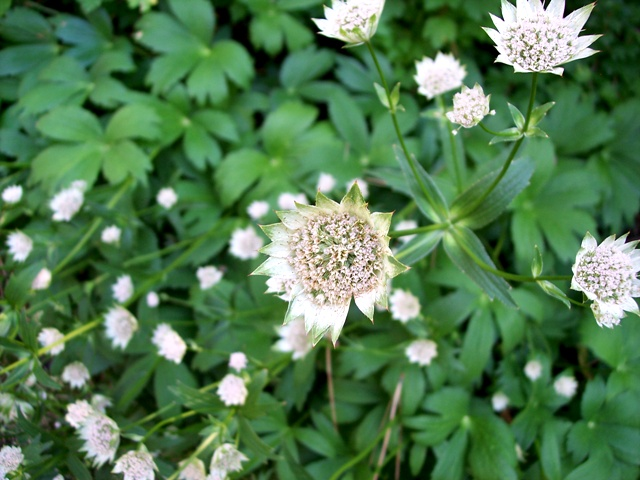 Summer Flower 09