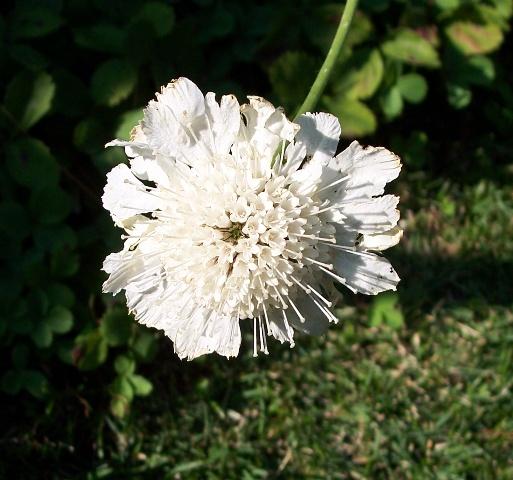 Summer Flower 09 2